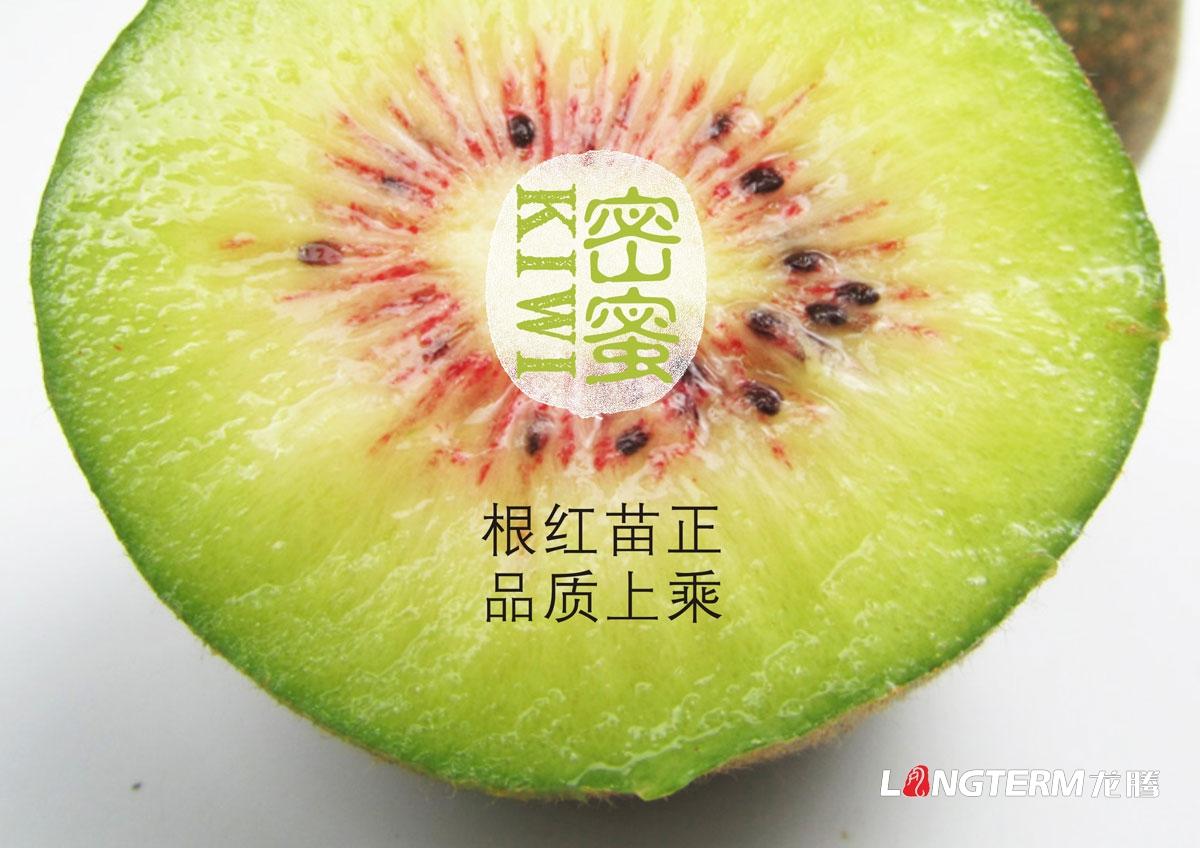 红心猕猴桃水果包装设计 红阳猕猴桃KIWI奇异果品牌形象包装礼盒设计